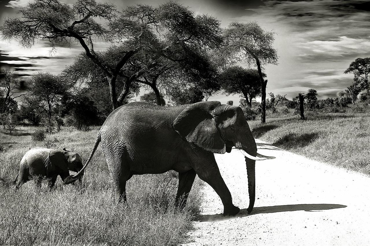 Visiter la Tanzanie, quelles activités exercé pour les touristes ?
