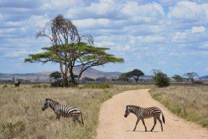 safari-tanzanie
